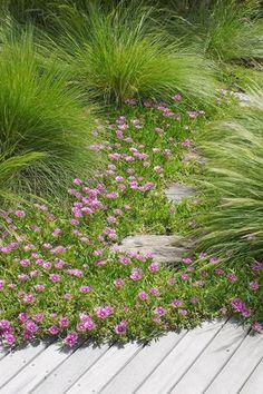 Romantic Garden Design With Pathways Contemporary: Romantic- Franchesca Watson Modern Garden Design, Landscape Design, House Landscape, Back Gardens, Outdoor Gardens, Australian Native Garden, Ground Cover Plants, Low Maintenance Garden, Delphinium