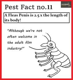 Control Issues, Pest Control, Film Industry, Yorkshire, Thing 1, Bed Bugs Treatment, Yorkshire Terrier Puppies
