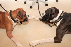 Lulu and Mac, our canine consultants! #siblinglove