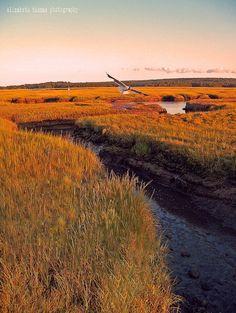 AUTUMN Sun on CAPE COD Salt Marsh Art, Fine Art Photography, by Elizabeth Thomas Photography of Cape Cod