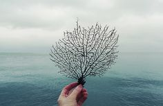sea fan by wild goose chase. found @creature comforts
