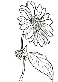 Sunflower Coloring Page for Girls Free Adult Coloring, Coloring Pages For Girls, Coloring Pages To Print, Coloring Book Pages, Spring Coloring Pages, Sunflower Stencil, Sunflower Colors, Sunflower Sketches, Sunflower Drawing