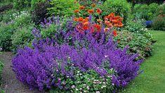 Šanta vynikne ve větším trsu, který můžete zkombinovat s dalšími květinami Hardy Perennials, Growing Seeds, Garden Borders, Gras, Front Yard Landscaping, Landscaping Ideas, Flower Seeds, Garden Styles, Agriculture