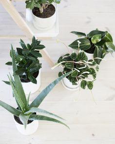 Potted Houseplants
