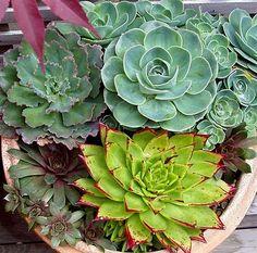 pinterest succulents | North Texas Heat Wave Drought Resistant Plants | Captain Ron's Lawns ...