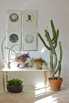 Indoor plants and house plants. Botanical living, rooms with foliage. Green homes and design. Cactus.