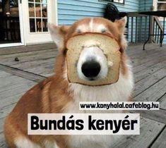 Peeps, Corgi, Blog, Animals, Funny Cats, Wednesday, Bread, Website, Baking