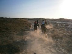 Perfect sandy tracks for galloping http://horsesnsheep.wix.com/saltlakestableskos#!open-spaces-to-ride/c1pk4