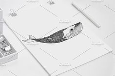 Patrick Whale hand drawn by Tuky Waingan on @creativemarket