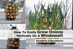 http://media.hometipsworld.com/wp-content/uploads/grow-onions-auntiedogmasgardenspot-wordpress-com.jpg