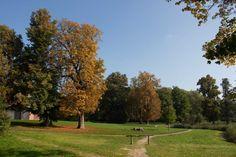 Bilder von einer Malreise auf der Insel Rügen   Sonniger Herbst im Park von Putbus (c) Frank Koebsch (1)