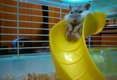 This chubby hamster that finally realized he might be too old for the playground: | 28 Animals Who Have Made A Huge Mistake