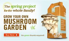 Recycling to the best!  Recycled coffee grounds to grow mushrooms