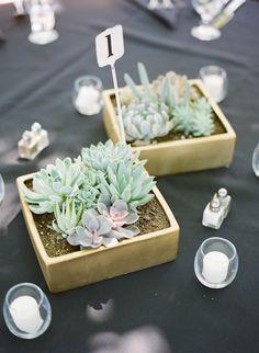 Baby cacti centerpieces