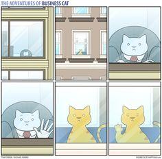 Business Cat - Window