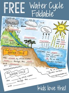 Free water cycle interactive notebook activities & more science doodle free! the water cycle interactive Second Grade Science, Middle School Science, Elementary Science, Science Classroom, Teaching Science, Science Education, Teaching Weather, Life Science, Earth Science Lessons