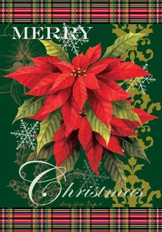 Merry Christmas to everyone, and take care with the Christmas Poinsettia Plant, that is VERY POISONOUS for the cats ! Merry Christmas Message, Christmas Tree Bows, Christmas Garden, Christmas Poinsettia, Christmas Banners, Merry Christmas Everyone, Outdoor Christmas Decorations, Xmas Ornaments, Xmas Tree
