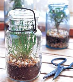 Need to do this! Kitchen herb garden in mason jars  Almost any herb can be started from seed in a mason jar. Chive, thyme, and rosemary are excellent choices. For each, follow package instructions and keep soil warm, moist, and in full light until seeds have germinated. When they outgrow their space, you can cut them as needed, or transplant them into a larger container or into the garden.""