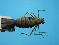 Foam Dragonfly Nymph Material: Hool - Gamalatsu S11-4L size 6 Body - 2mm Thick Close cell foam Wing - Tape Wing Legs - Knob Turkey Wing fib...