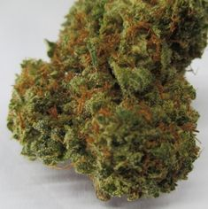 Buy Indica Marijuana products online in Canada and get Indica weed delivered right to your front door with free secure delivery. Place your order now! Buy Weed Online, Shiva, Delivery, Canada, Herbs, Free, Stuff To Buy, Products, Herb