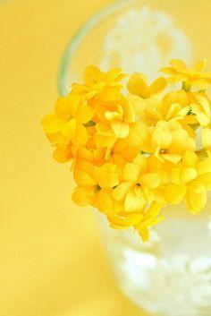 die raupe wünscht einen schönen tag :o)  Color Amarillo - Yellow!!!