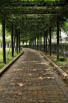 Shaded Path, Okayama, Japan by lestaylorphoto, via Flickr.  My dream home needs a grape arbor like this, over a stone path.....