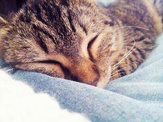 Sleepy cat i like it