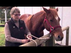 All tied up? Know how to safely hard tie your horse with the Certified Horsemanship Association | EquiSearch Video Library