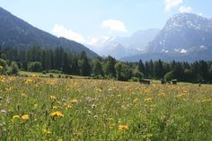 Austria...the hills are a live with the sound of music