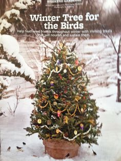 Christmas Tree for the Birds Party. Winter feeding tree for the birds from Country Gardens magazine