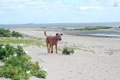 Yippee it's beach time! Camber Sands in East Sussex is dog friendly all year round (a small area is restricted during the summer