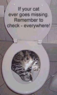 Oh cats...