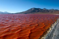 Laguna Colorada - Google Search