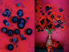 poppy photos dietlind wolf, red and purple bonanza.
