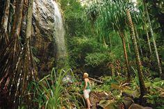 The Vallée de Mai nature reserve is a UNESCO World Heritage Site.