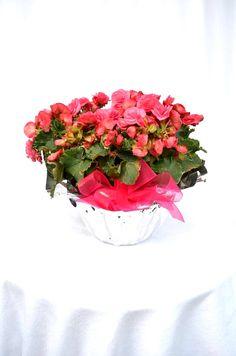 En Lizart ayudamos a nuestros clientes a encontrar las flores ideales para expresar ese sentimiento, cada color, aroma y diseño es único y especial para juntos lograr cautivar a ese ser tan querido.   40 años en la ornamentación floral hacen de Lizart la única opción para confiar ese presente que marcará un recuerdo perdurable.   #SomosLizart arte en las flores.   -55401723 -55204323   *entregas en todo el D.F.