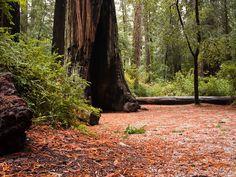 Big Basin Redwoods State Park, Boulder Creek, California, United States