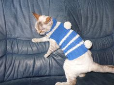 Soft Warm and Comfy Handmade Cat Small Dog Jumper Sweater Dress Wool turtle-neck Blue White Stripes - animal, pet, hairless sphynx devonrex by TrendyKitty on Etsy