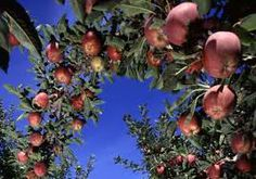 above the fruited plain - Google Search