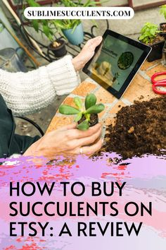 It's appropriate that a great place to buy a quirky plant like a succulent would be a quirky online marketplace like Etsy. Check out this review on how to buy succulents on Etsy. #succulents #indoorgardening #outdoorgardening #gardeningtips #cacti #etsy Flowering Succulents, Cacti And Succulents, Planting Succulents, Cactus Plants, Succulent Bouquet, Succulent Care, Succulent Species, Rare Plants, The More You Know