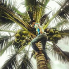 Take some young coconut