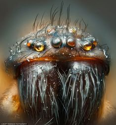 Nikon 2012 Small World Photomicrography Competition Harold Taylor Kensworth, Dunstable, United Kingdom House spider Cool Insects, Bugs And Insects, Best Microscope, Electron Microscope, Insect Eyes, Insect Art, Nikon Small World, Photo Macro, Art Beauté