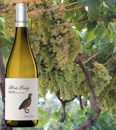 �� NUESTRO BLANCO ��  #amantesdelvino #vida #bodega #adega #bodegasgallegas #vinos #vinosdegalicia #doribeiro #ribeiro #wine #delicious #taste #shoponline #linkinbio #blancosytintos #vinoblanco #vinotinto #experiencias #tradicion #calidad #uvas #instalove #instagood http://misstagram.com/ipost/1552801368975113494/?code=BWMqJ40gH0W