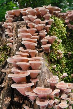 Unknown fungi from Japan