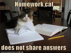 you go homework cat.