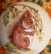 Image of Autumn Squirrel