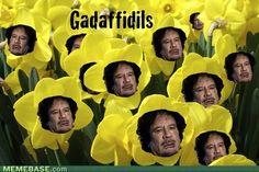 Gadaffidils