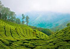nature-tea-plantation.png