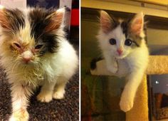 Compilamos 45 imagens de gatos antes e após receberem ajuda, cuidados e algumas doses de amor e carinho de seus novos donos ou voluntários de ONGs protetoras.