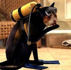 """Scuba diving Always wonder if I'll know which direction is """"up""""???.....me no like"""